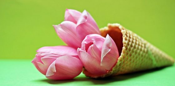 tulips-2148706_640