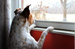 dog-658206_640