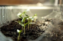 sprout-2218961_640